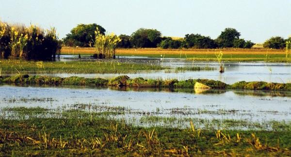 Bangweulu_Swamps